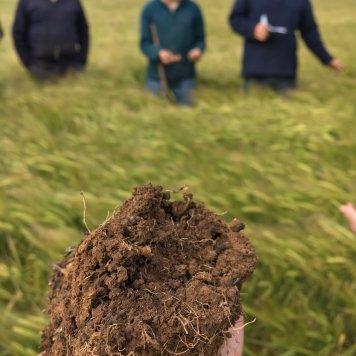 cundare soil