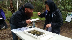Corangamite CMA's Jason Burgoyne takes Roqua Husseini through a Water bug survey