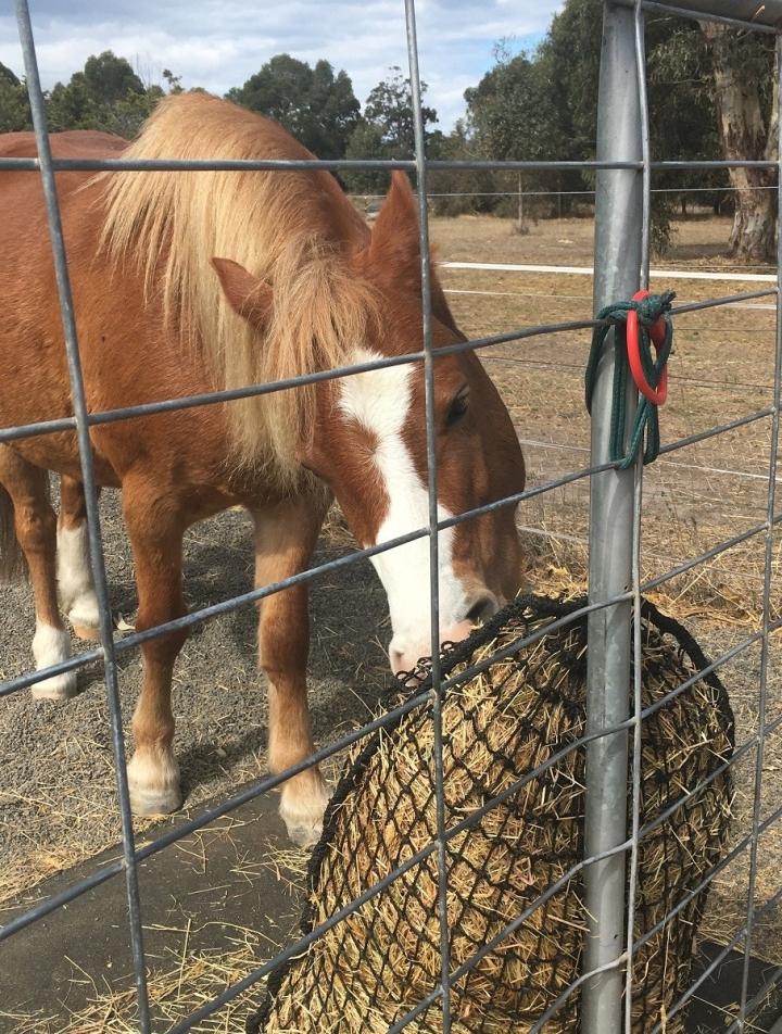 pony kathy s