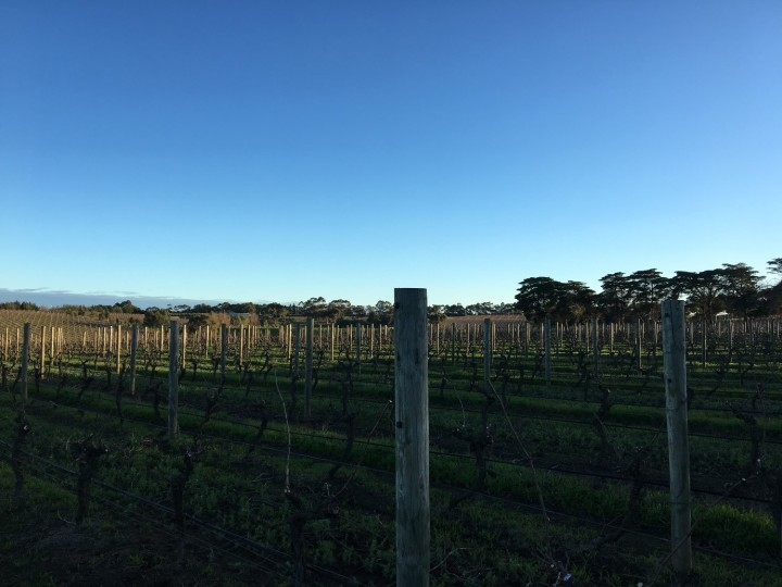 Bannockburn Wines 4