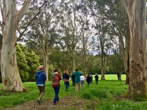 Helen Masters' Limousin cattle stud farm 'Tanybryn Park' is located in the magnificent Otway Ranges