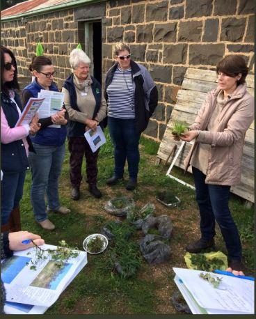 women on farms pasture barwonleigh